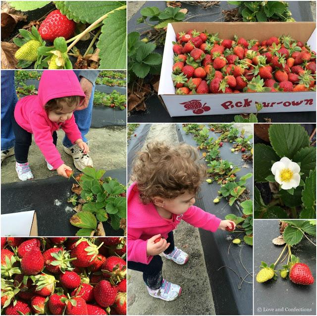 Strawberry Freezer Jam from LoveandConfections.com